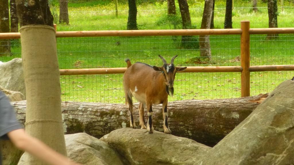 Parc Animalier Vannes