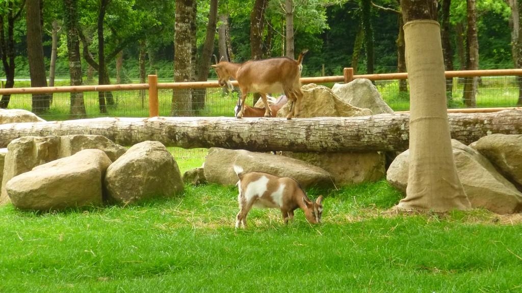Parc Animalier Vannes Espace Pédagogique